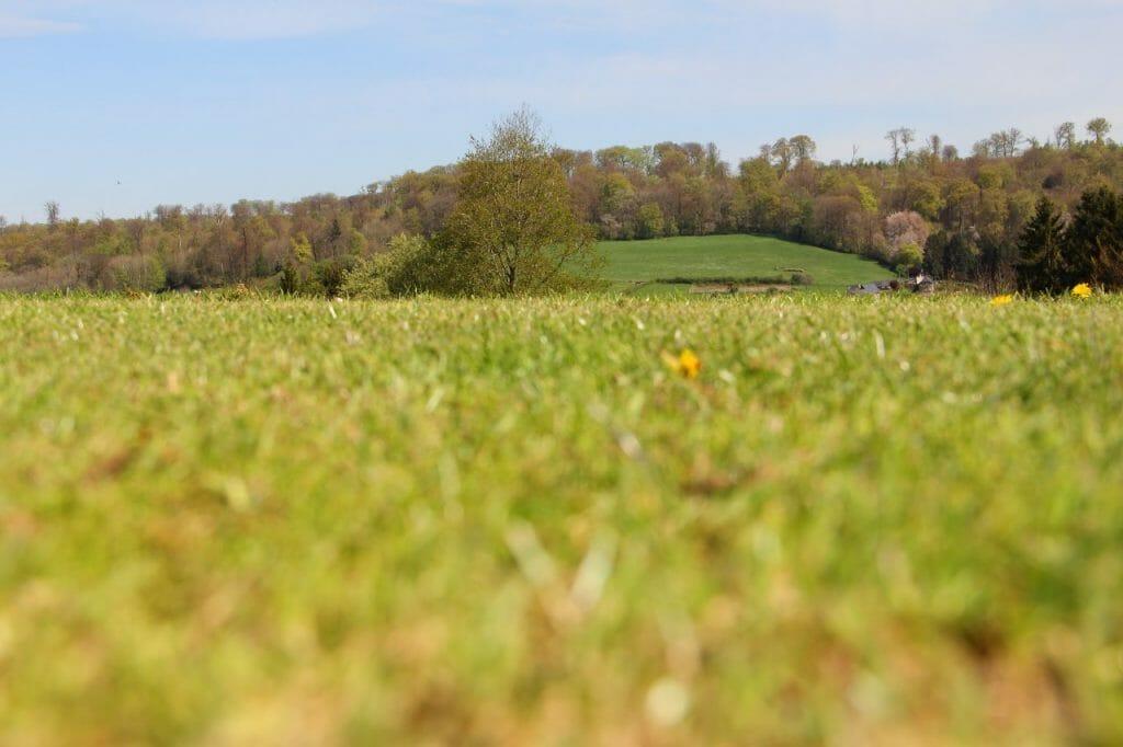 golf fairway grasses